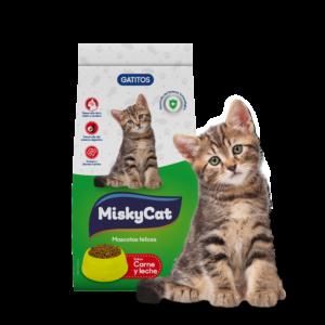 MiskyCat
